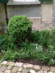 Junge Heilkräuter im Garten am Falkenplatz 14
