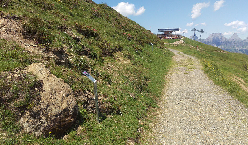 Auf dem Alpenfloraweg am Flumserberg, Blick Richtung Prodkamm, © Heidiland Tourismus