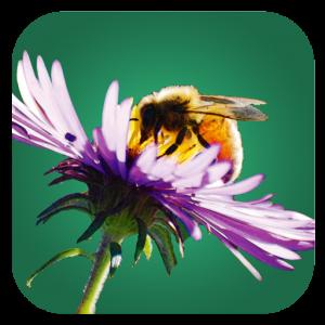 Bienenpflanzen_Icon_GooglePlay
