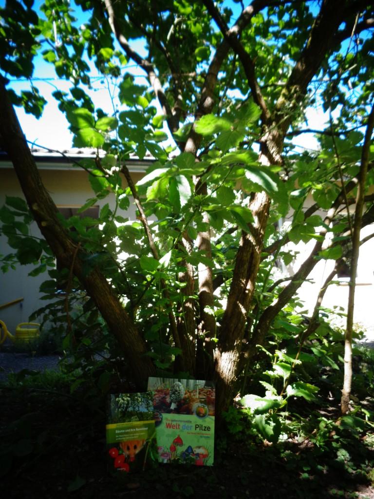 geheimnisvolle Welt der Pilze und Bäume und ihre Bewohner (5)