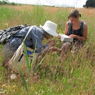 Flora des Kantons Zürich: Auf den Spuren der Biodiversität